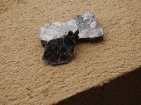 muscovite-photo-6