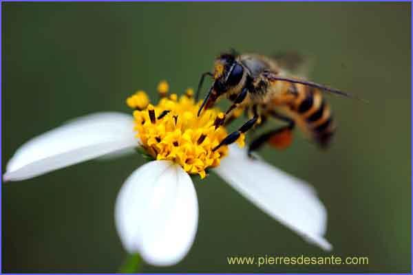 Changement climatique abeilles