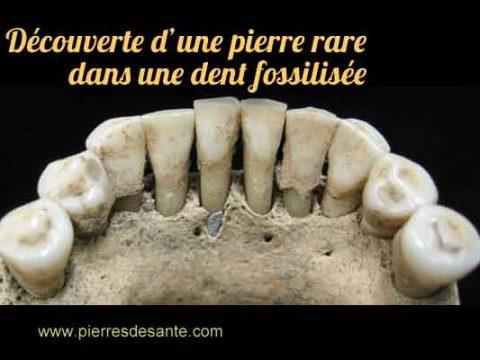 Découverte d'une pierre rare de lapis-lazuli dans une dent fossilisée